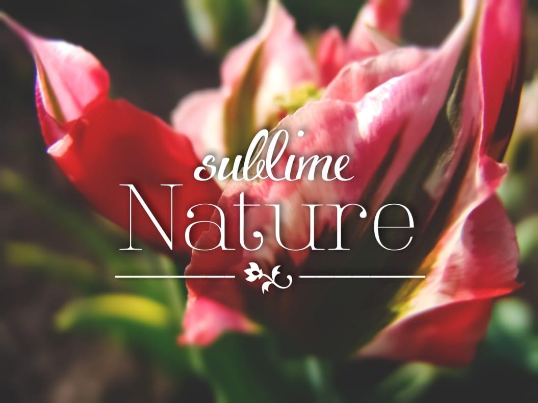 flower wallpaper fashion blog romania blog fashion romania roxi rose top popular timisoara arad lifestyle stil style flori tulip lalea